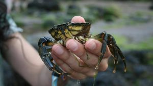 Crabbing in Whitby
