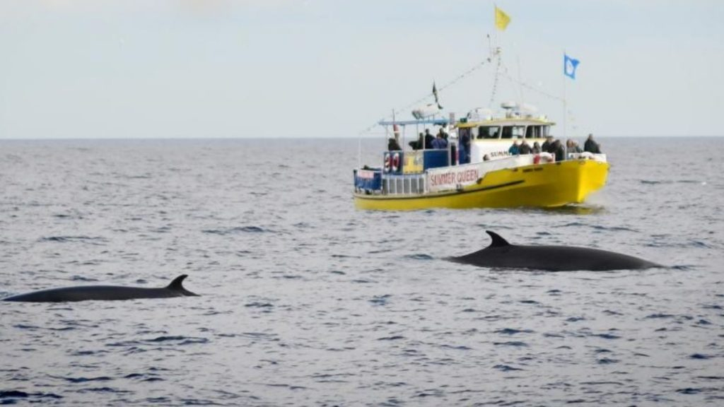 Summer Queen Whitby Whale Watching Trips