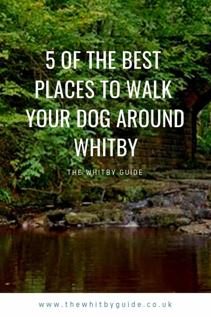 5 Of The Best Places To Walk Your Dog Around Whitby