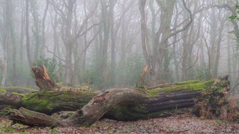 Mulgrave Wood