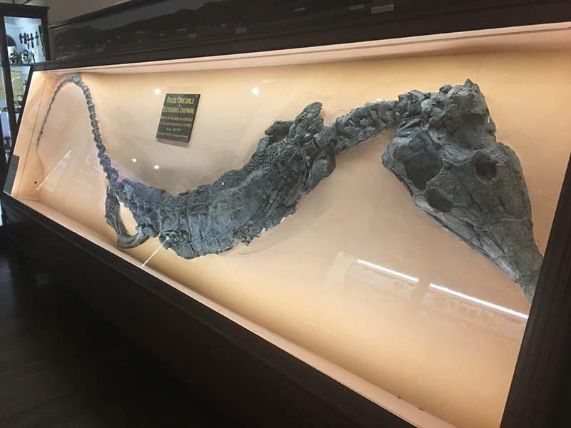 Teleosaurus Chapmani