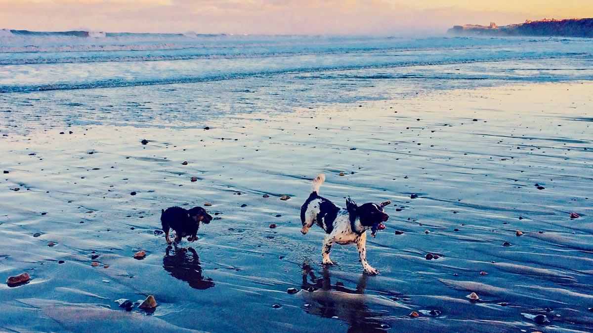 Whitby Dog Walks