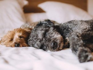 Pet Friendly Whitby Bed And Breakfasts With Parking
