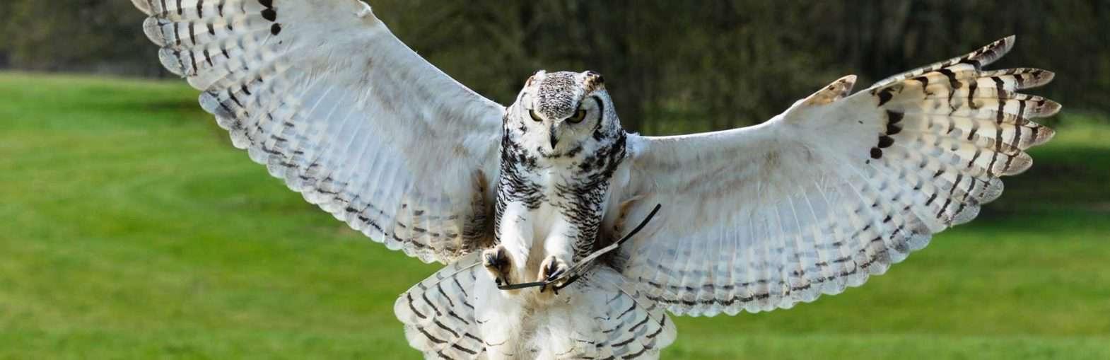 Owl Prowl Evening; What's On In Whitby In February (North York Moors and Yorkshire Coast)