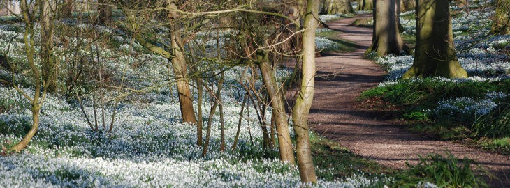Snowdrop Opening; What's On In Whitby In February (North York Moors and Yorkshire Coast)