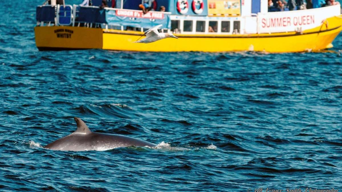Boat Trips in Whitby, Whitby Coastal Cruises Dolphin