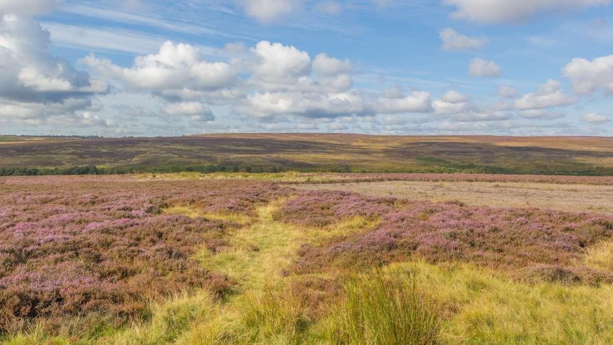 Robin Hoods' Bay to Brow Moor Walk