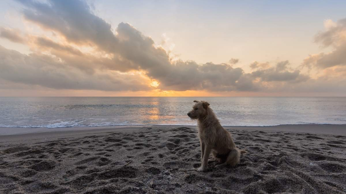 Dog Friendly Hotels In Whitby
