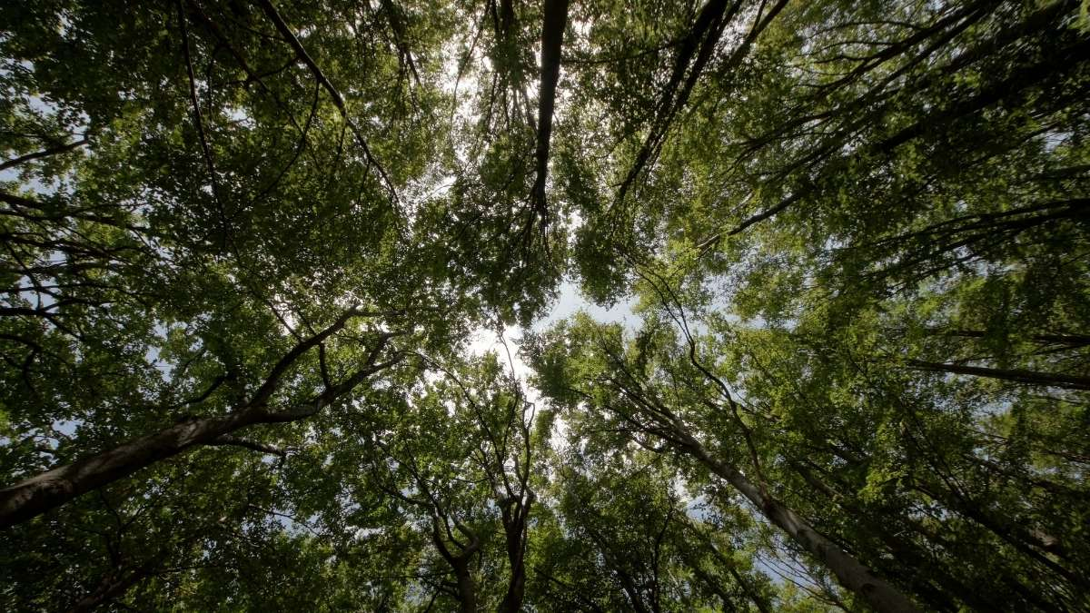 Raincliffe Woods