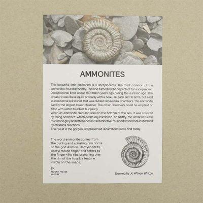 Whitby Ammonite Soaps
