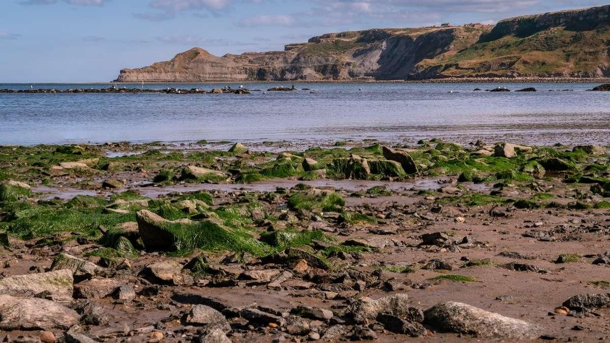 Runswick Bay Beach Fossil Hunting