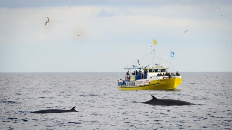 Whitby Whale Watching and Boat Trips