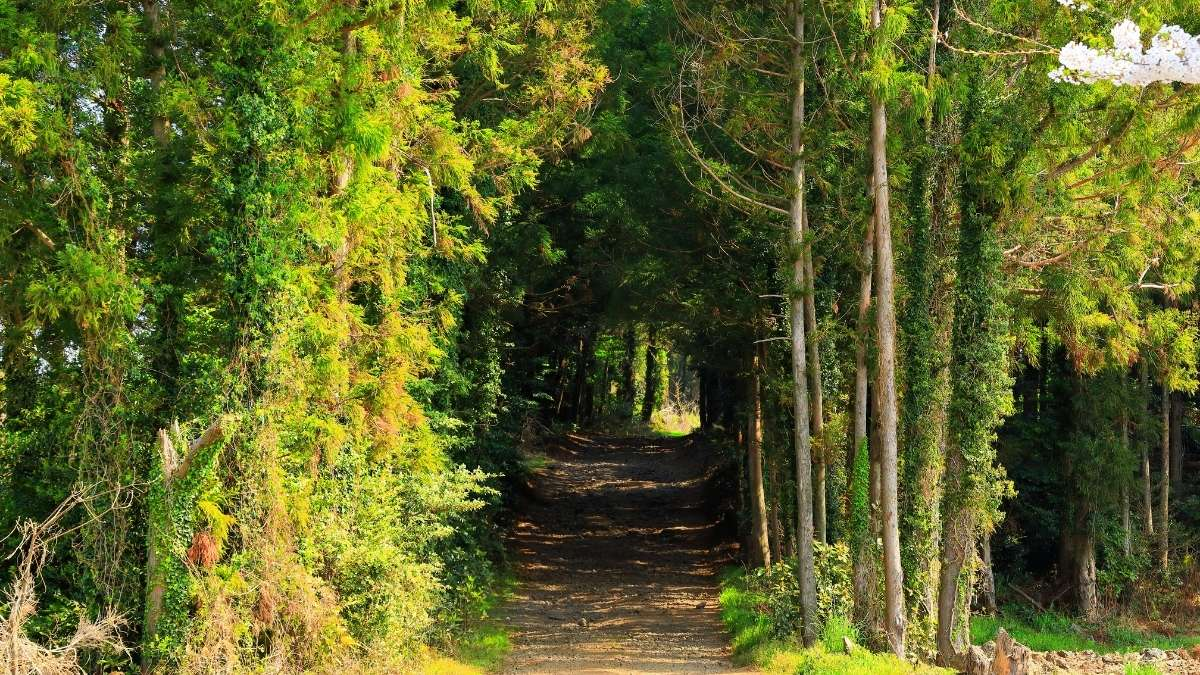 Guisborough Forest and Walkway (1)