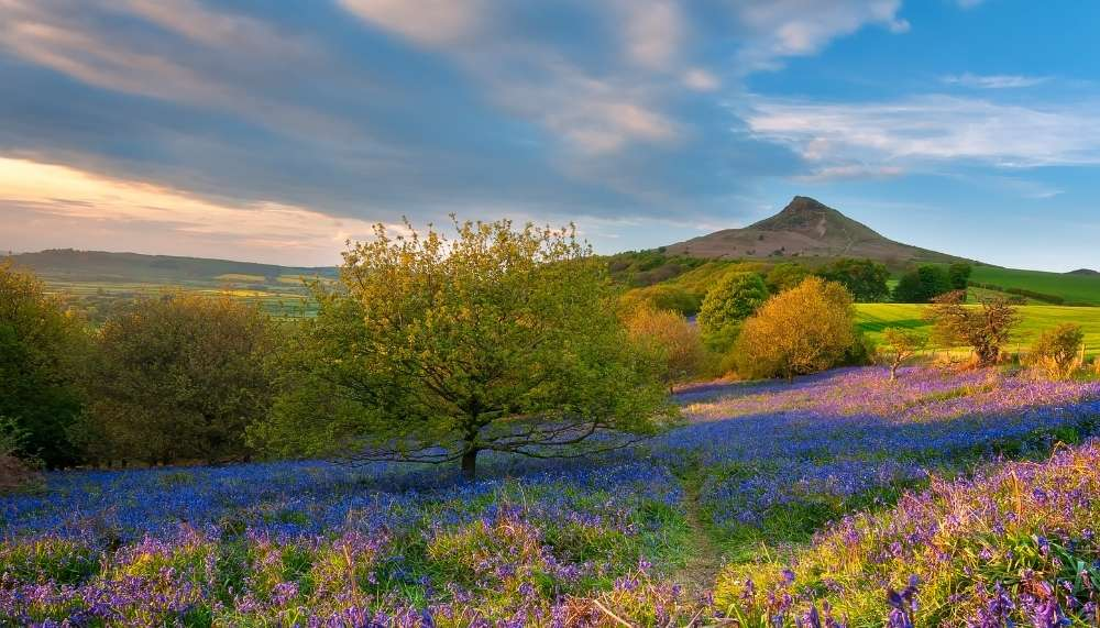 Roseberry Topping in the North York Moors